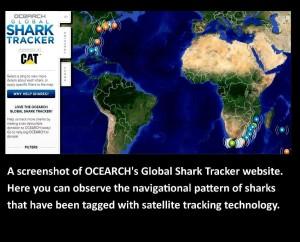 tracking sharks photo